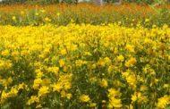 Лекарственные растения их применение - основные сведения
